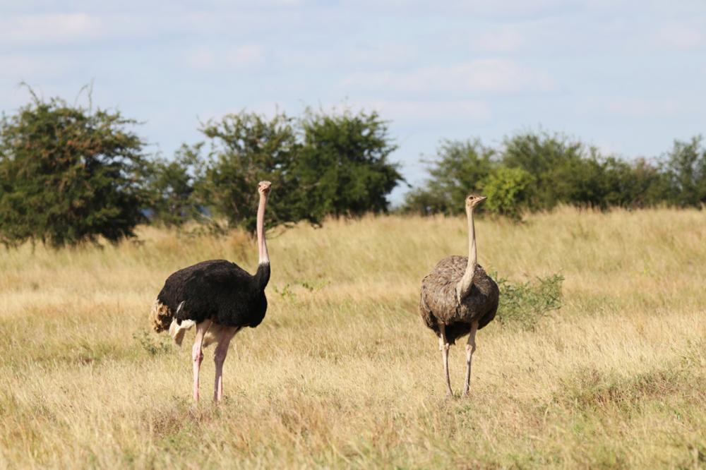 Où observer les oiseaux en Tanzanie ?