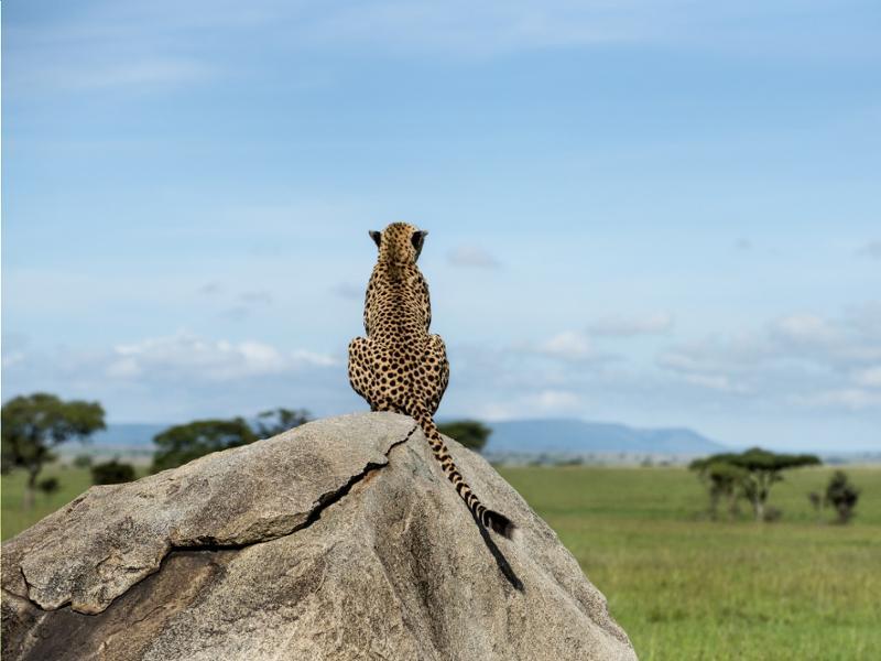 Les plus beaux safaris du Nord de la Tanzanie