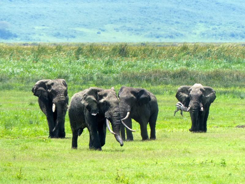 Faire un safari en famille en Tanzanie : nos conseils