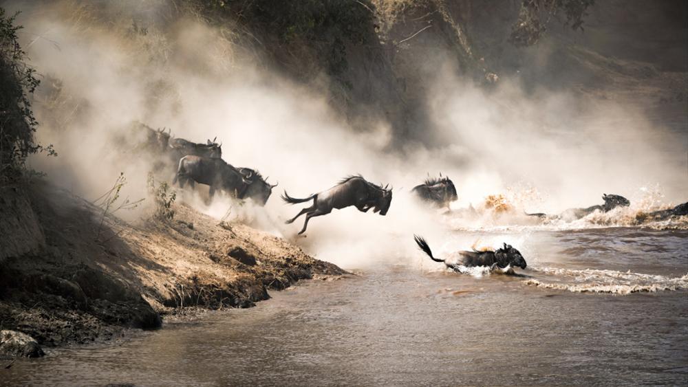 Les erreurs à éviter lors de votre safari