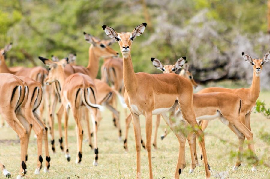 Les plus beaux safaris du Sud de la Tanzanie