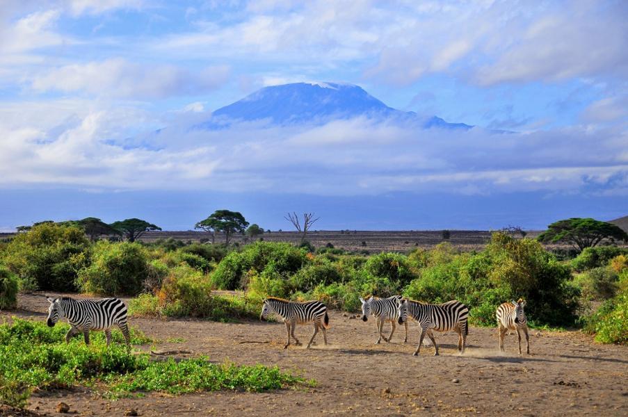 Pourquoi partir en Tanzanie